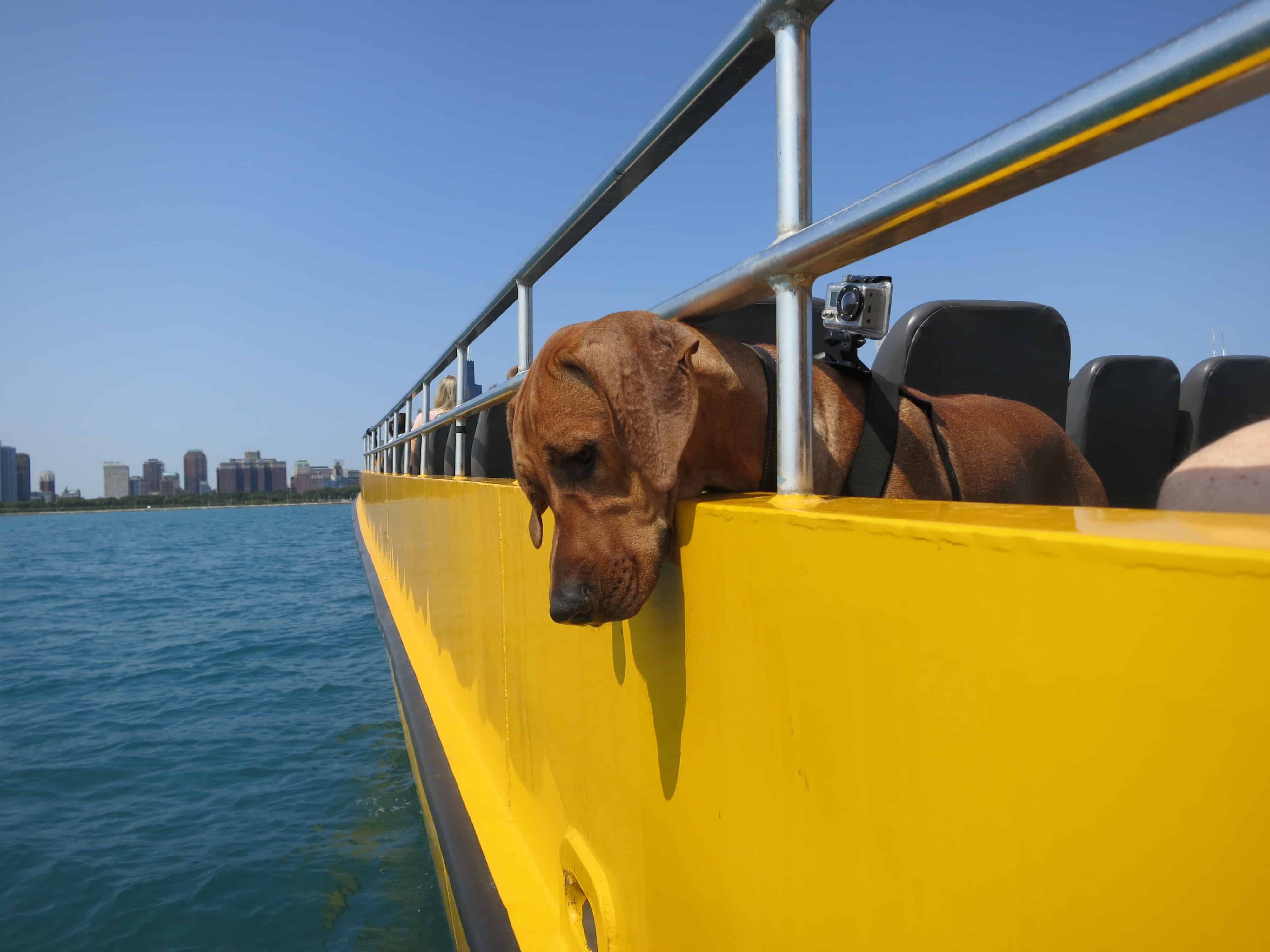pet friendly places things to do with your dog