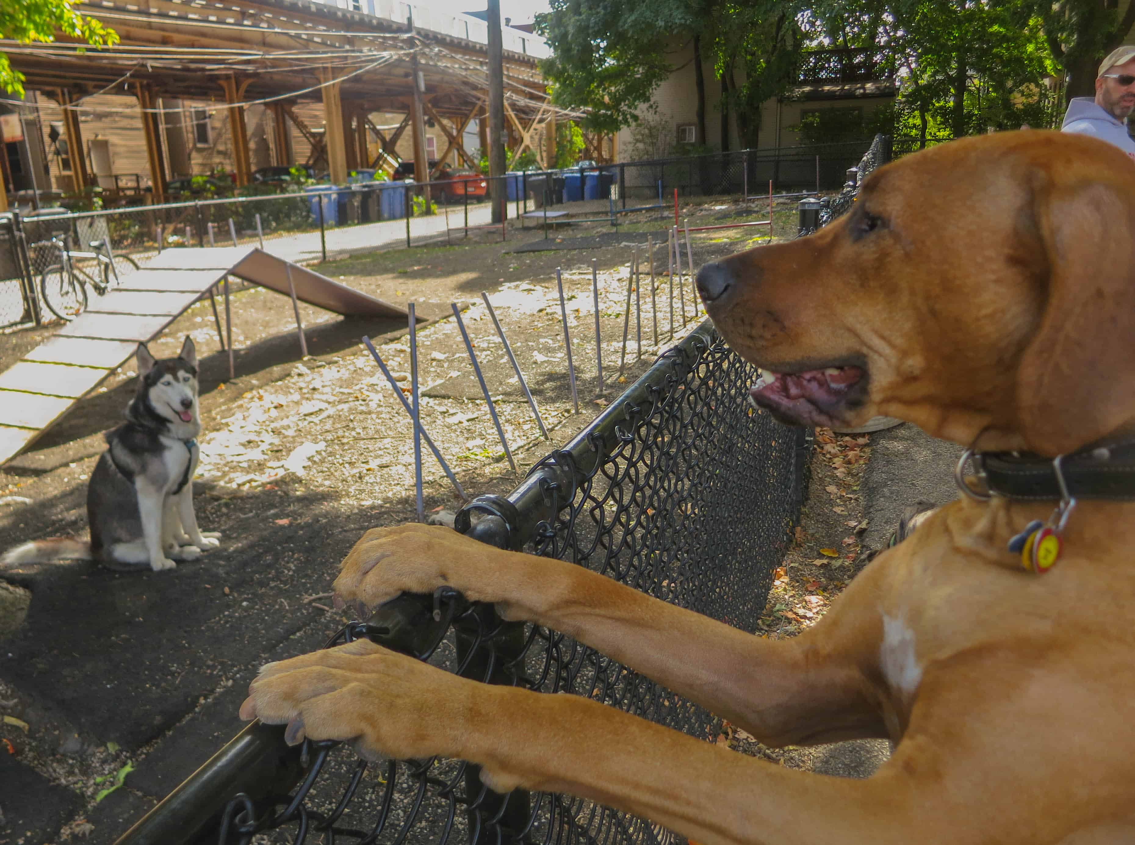 Rhodesian Ridgeback photo, pet adventure, dog blog, pet photos