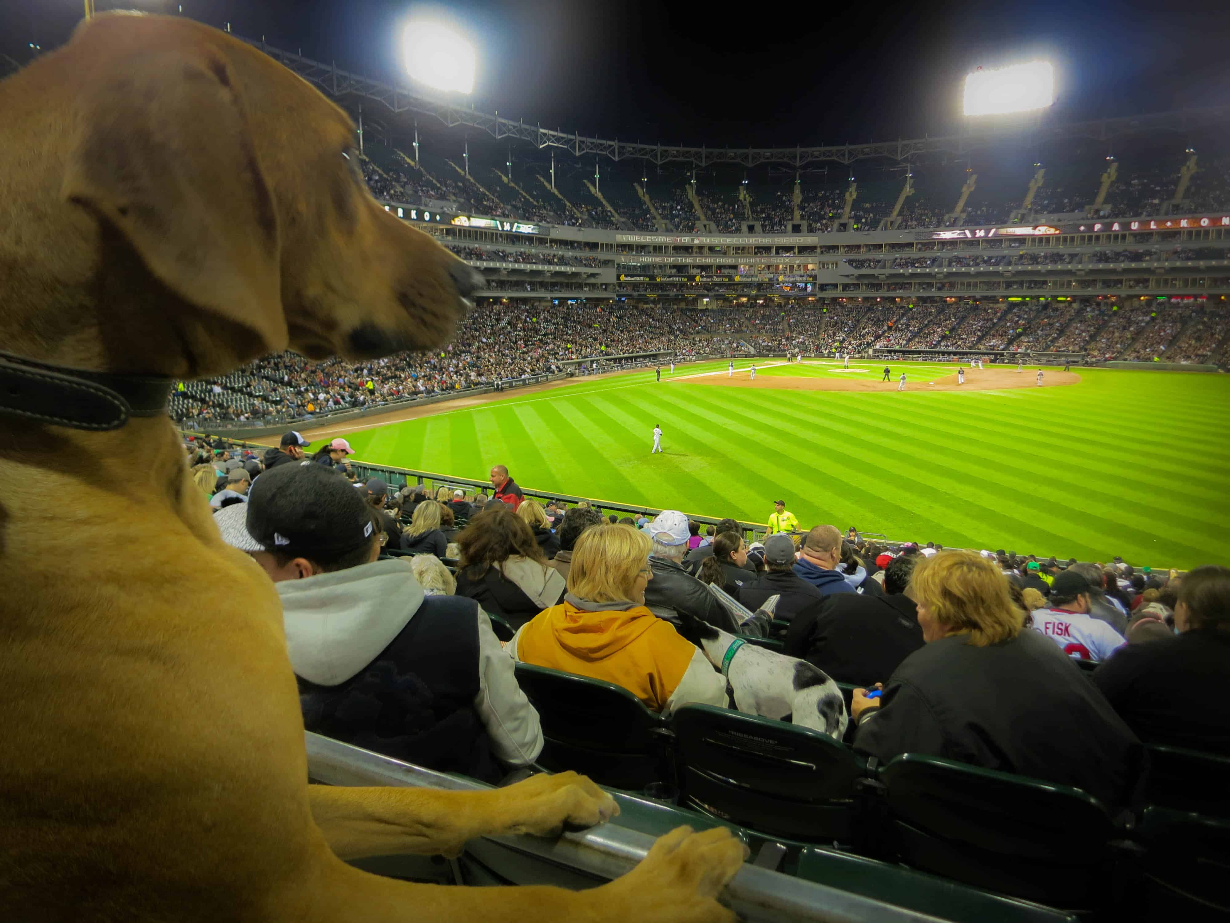 Pet blog, pet adventure, Major League Baseball, dogs, MLB, pooches in the park