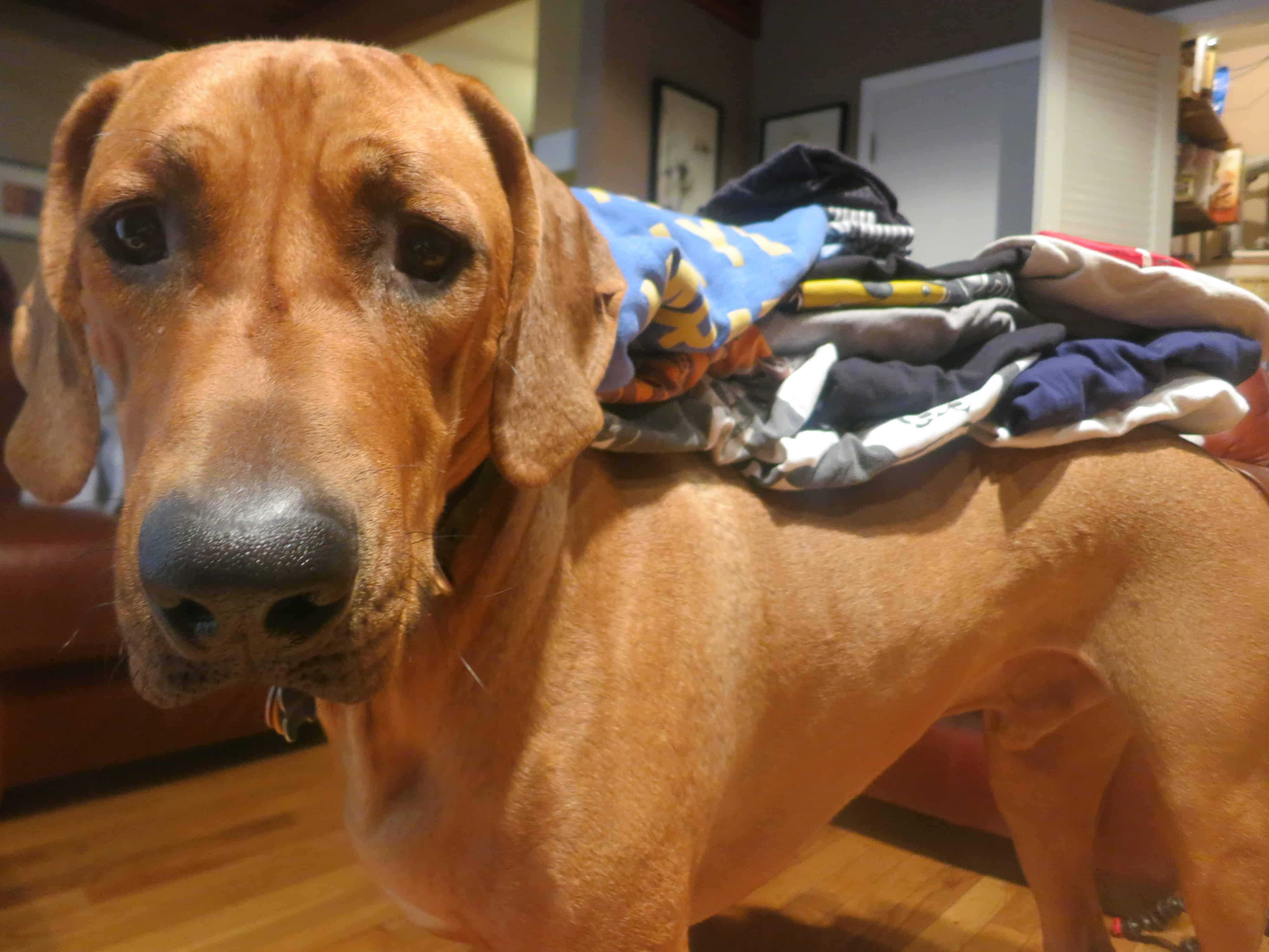 rhodesian ridgeback, dog blog, pet adventure