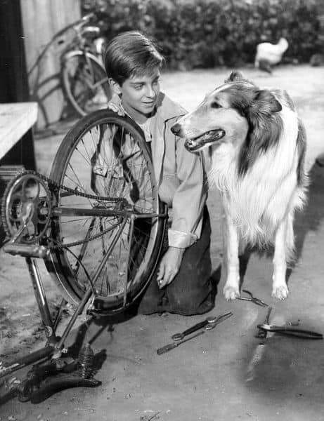 Lassie_and_Tommy_Rettig_1956