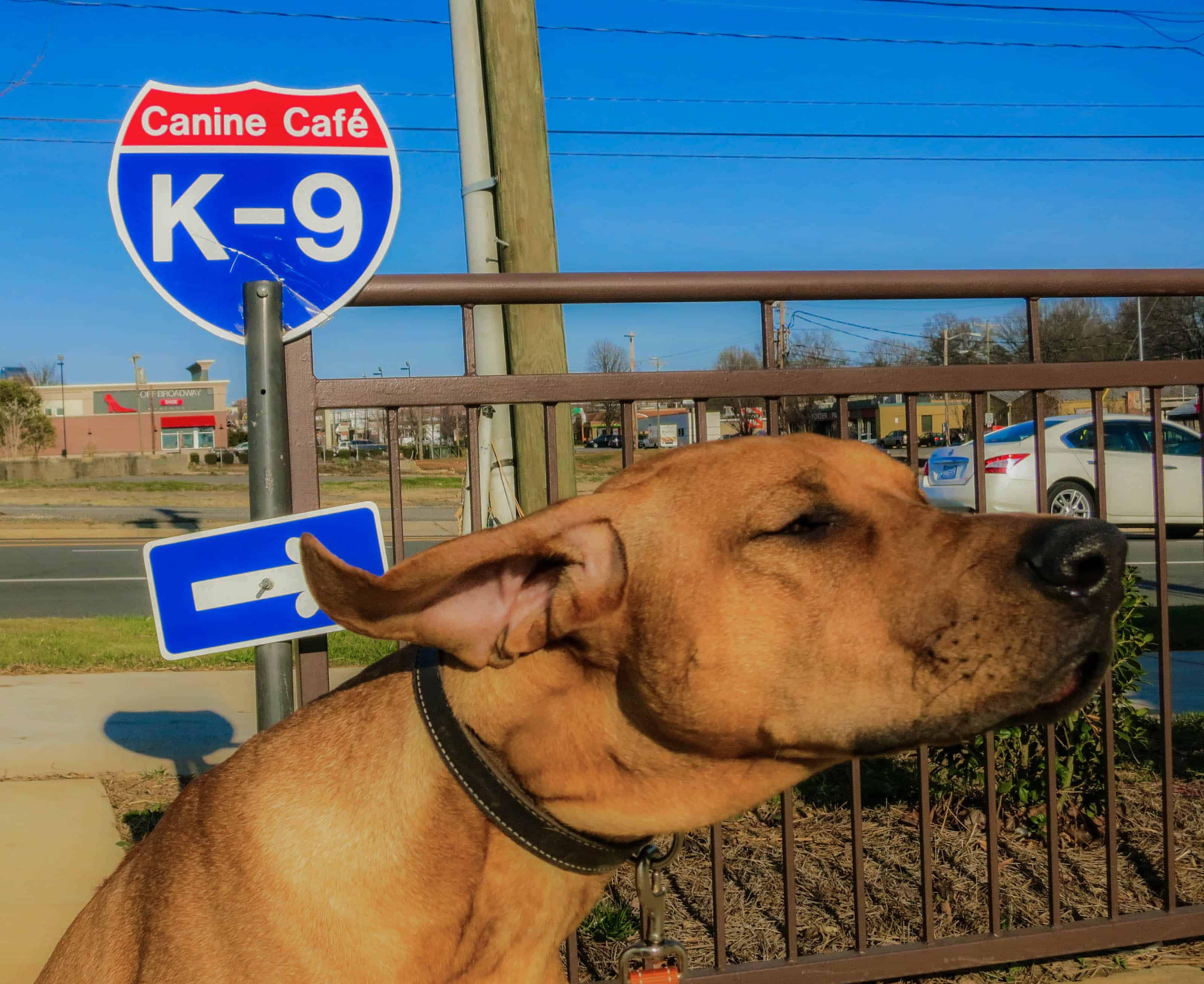 Rhodesian Ridgeback, dog adventure, traveling with you dog, pet friendly travel, dog photos