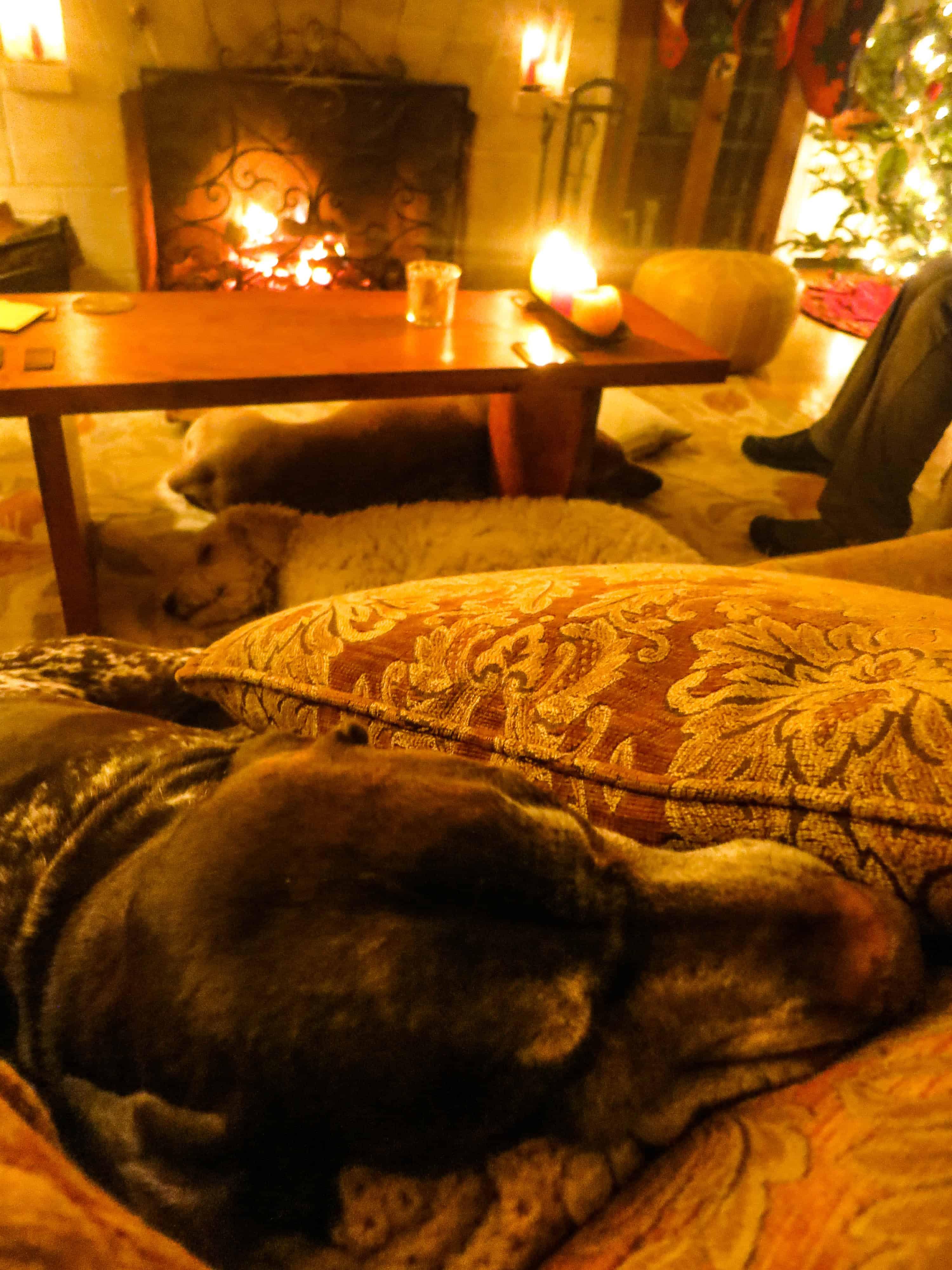 Pet blog, dog blog