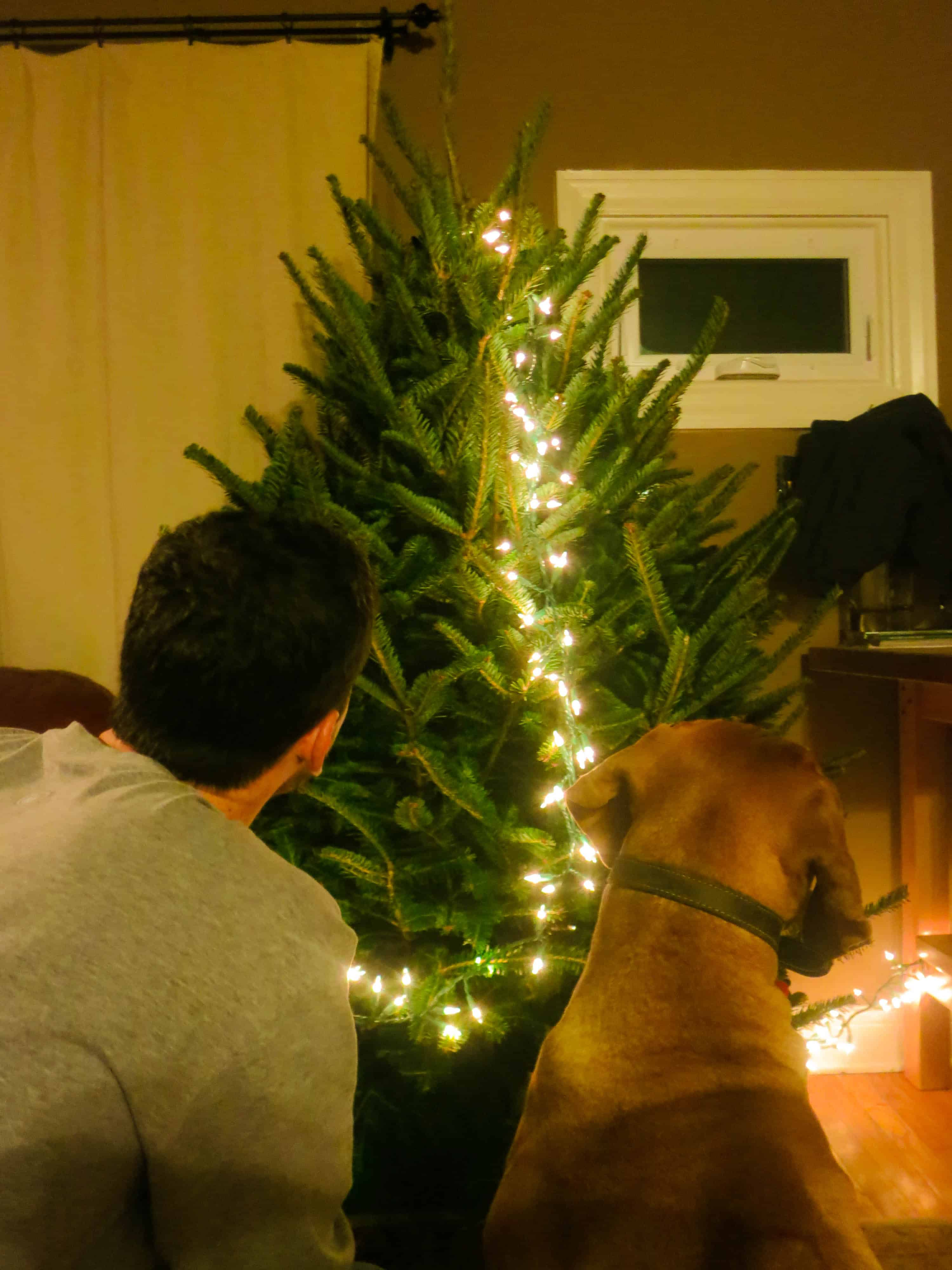 Rhodesian Ridgeback, pet adventure, dog blog